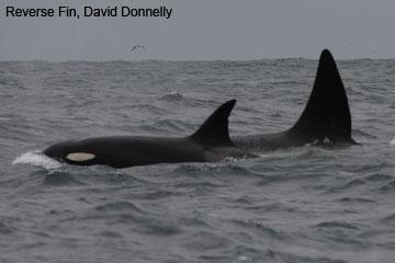 Australian Orca Database